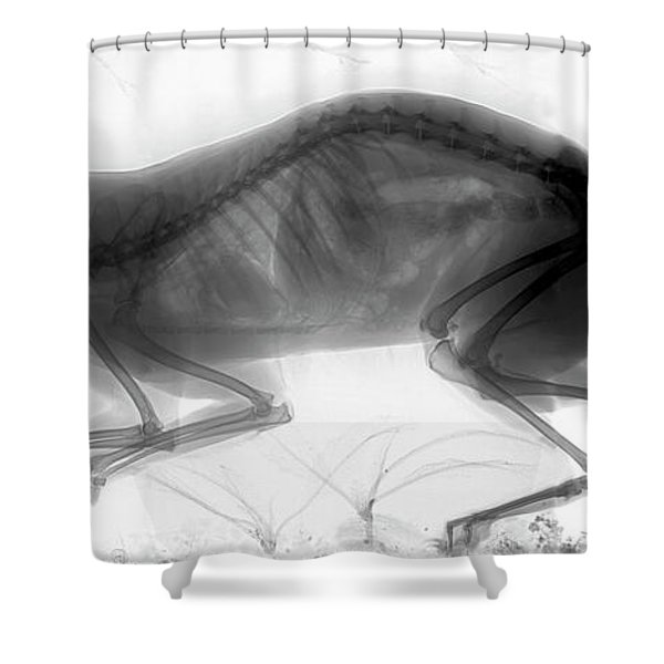 C026/6424 Shower Curtain