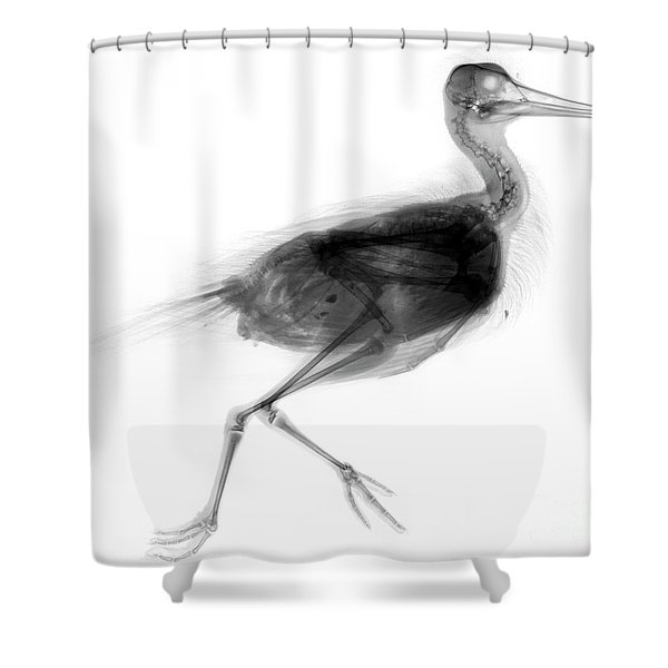 C026/7624 Shower Curtain