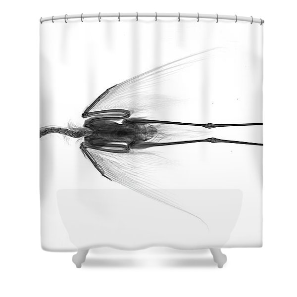 C035/4932 Shower Curtain
