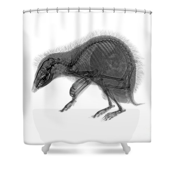 C037/9600 Shower Curtain
