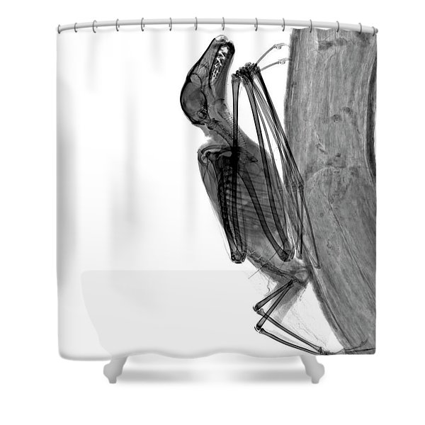 C037/9604 Shower Curtain