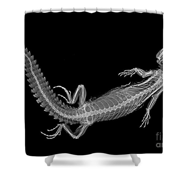 C038/4647 Shower Curtain