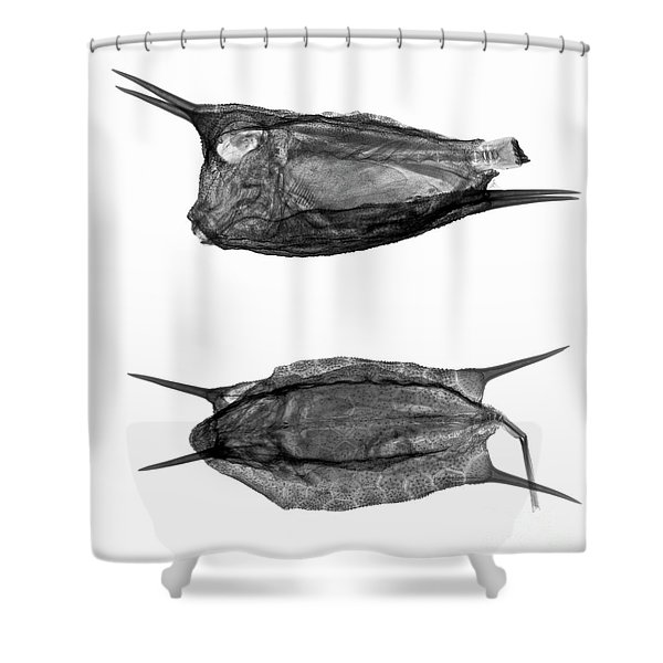 C038/4737 Shower Curtain