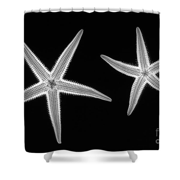 C038/4739 Shower Curtain