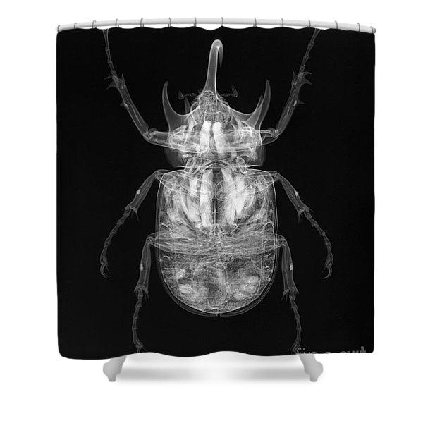 C038/4740 Shower Curtain