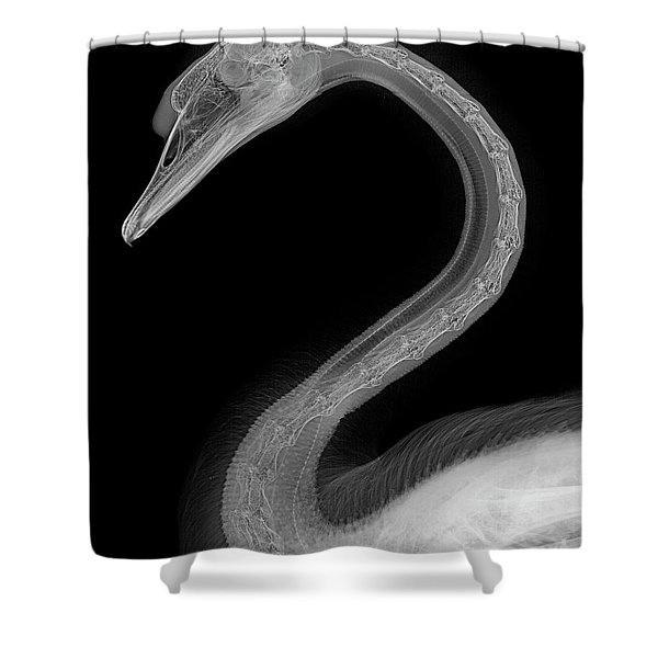 C046/1740 Shower Curtain