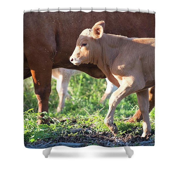 Shower Curtain featuring the photograph Calf by Rob D Imagery