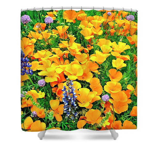 California Poppies And Betham Lupines Southern California Shower Curtain