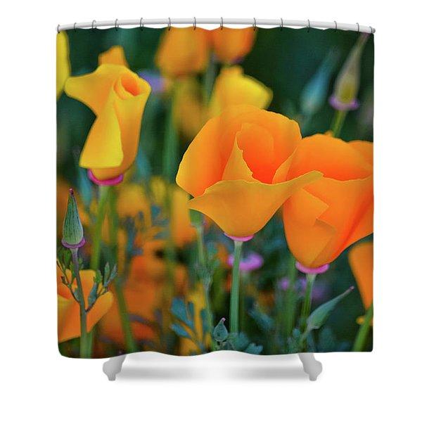 California Poppies Lake Elsinore Shower Curtain