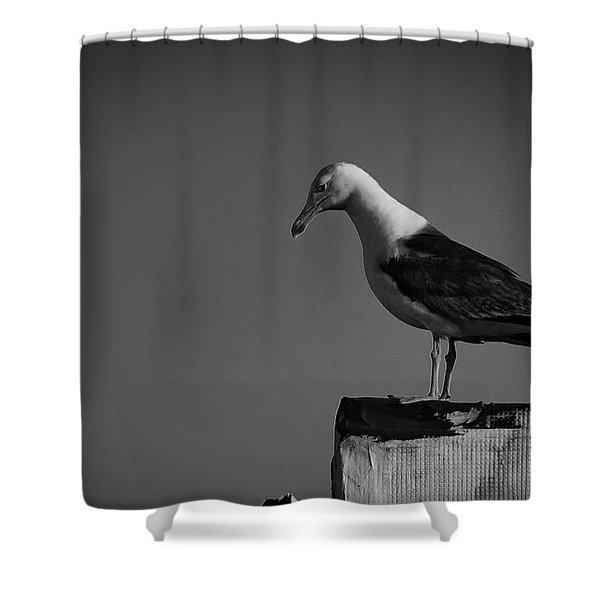 Calling Hitchcock Shower Curtain