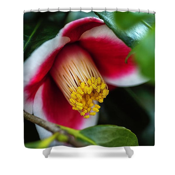 Camellia Bloom And Leaves Shower Curtain