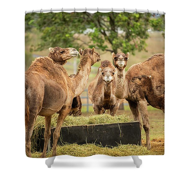 Shower Curtain featuring the photograph Camels Out Amongst Nature by Rob D Imagery