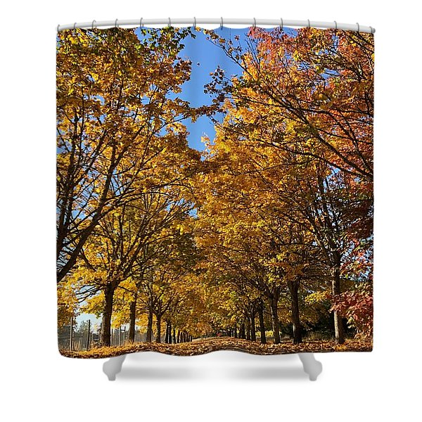 Canopy Of Color Shower Curtain