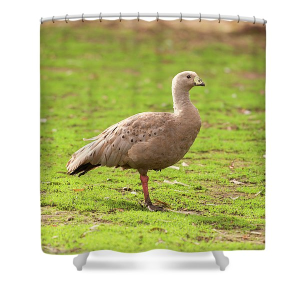Cape Barron Goose Shower Curtain