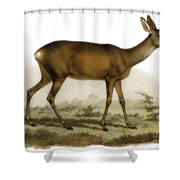 Capreolus Vulgaris Shower Curtain