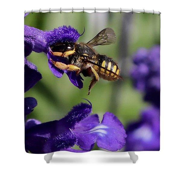 Carder Bee On Salvia Shower Curtain