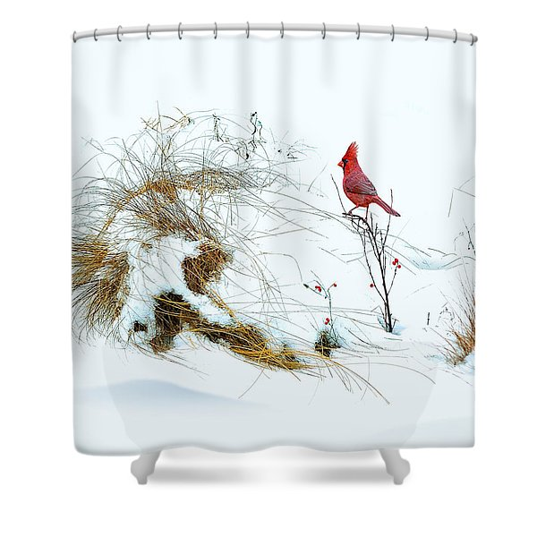 Cardinal Angel In The Snow Shower Curtain