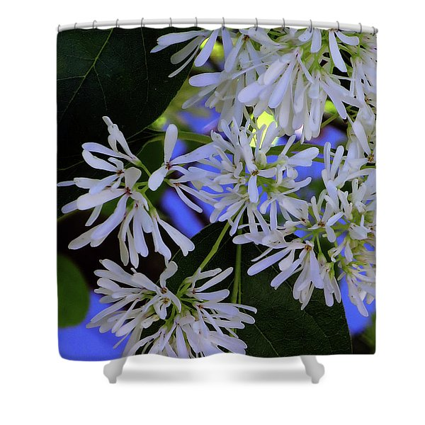 Carly's Tree - The Delicate Grow Strong Shower Curtain