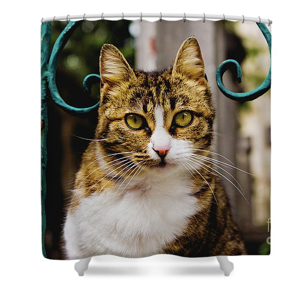 Cat On A Fence Shower Curtain