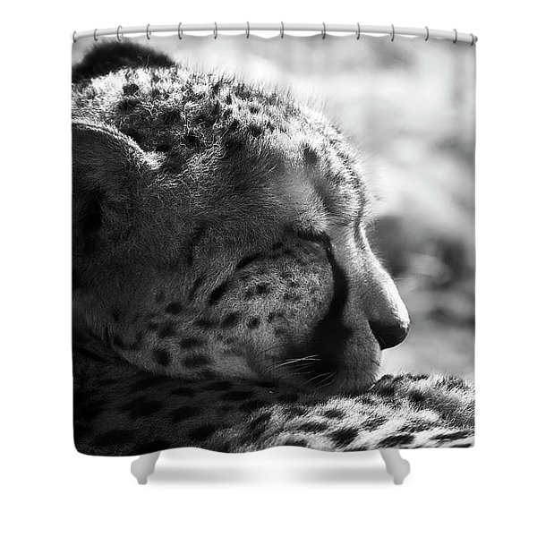 Shower Curtain featuring the photograph Catnap by Whitney Goodey