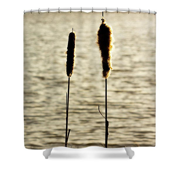 Shower Curtain featuring the photograph Cattails In The Sun by Scott Lyons