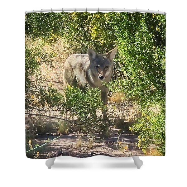 Cautious Coyote Shower Curtain