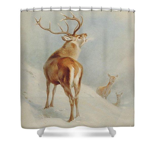 Cervus Elaphus, Red Deer Shower Curtain