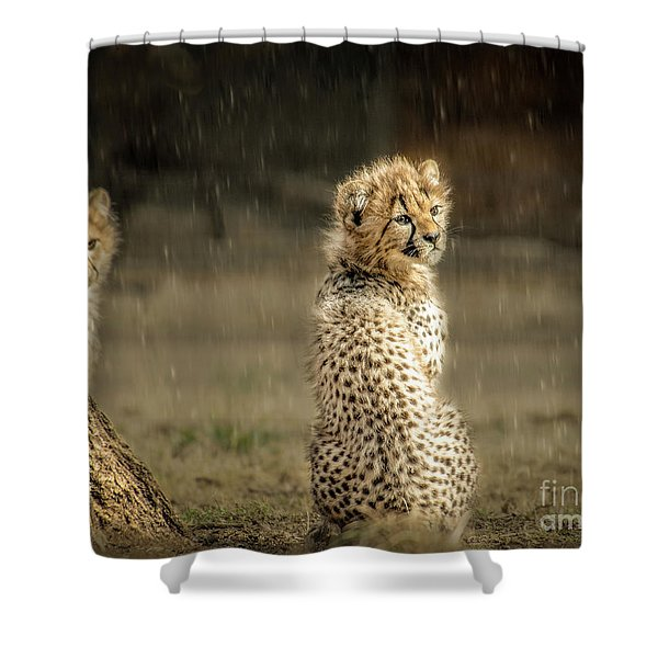 Cheetah Cubs And Rain 0168 Shower Curtain