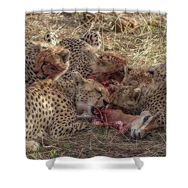 Cheetahs And Grant's Gazelle Shower Curtain