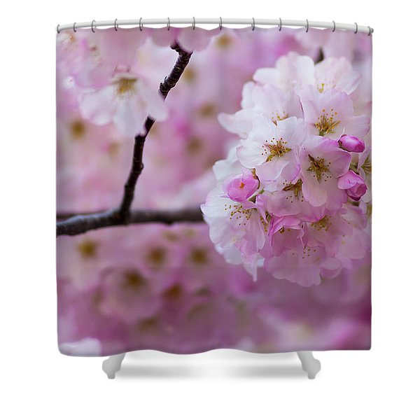 Cherry Blossom 8624 Shower Curtain