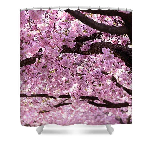 Cherry Blossom Trees Shower Curtain