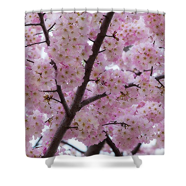 Cherry Blossoms 8611 Shower Curtain