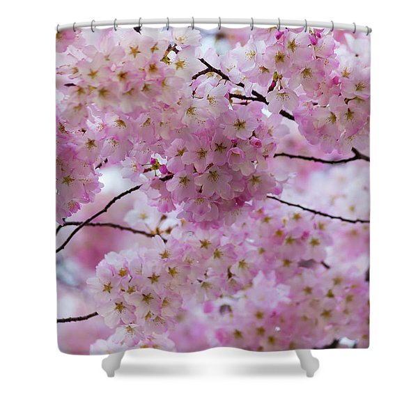 Cherry Blossoms 8625 Shower Curtain