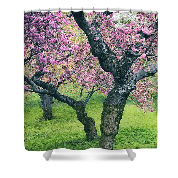 Cherry Trio Shower Curtain