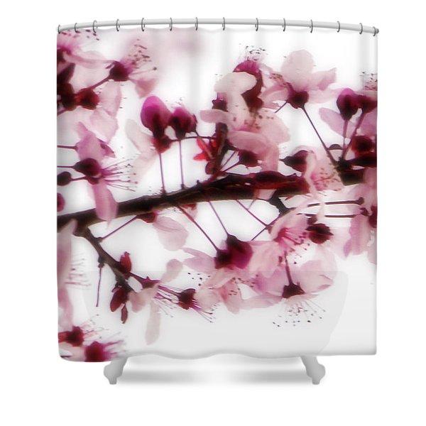 Cherry Triptych Center Panel Shower Curtain
