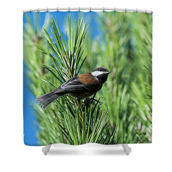 Chestnut-backed Chickadee Shower Curtain