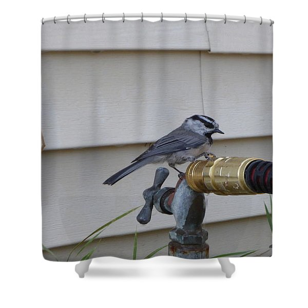 Shower Curtain featuring the photograph Chickadee On A Spigot by Charles Robinson