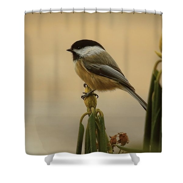 Chickadee On Rhododendron Shower Curtain