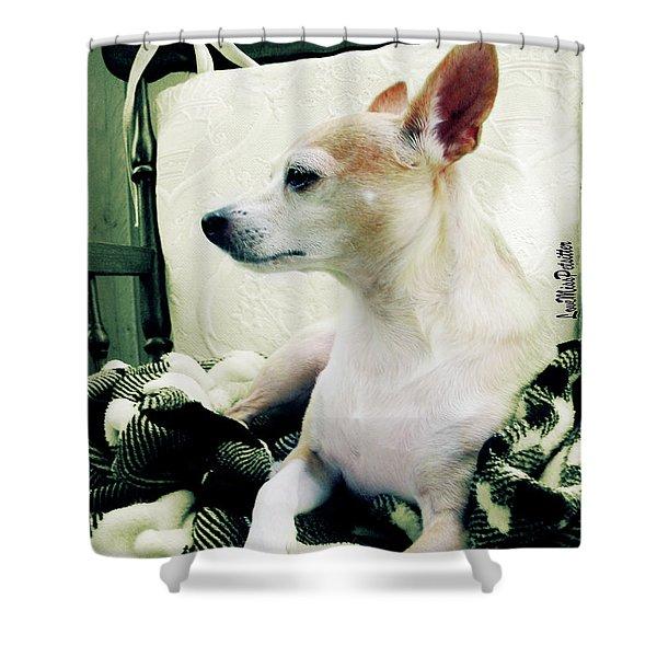 Chihuahua  Portrait  Shower Curtain