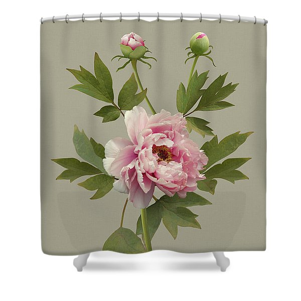 Chinese Pink Peony Shower Curtain