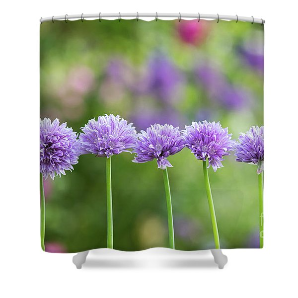 Chive Flowers Shower Curtain