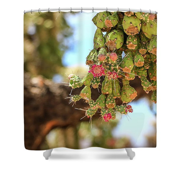 Shower Curtain featuring the photograph Cholla Cactus Blooms by Dawn Richards