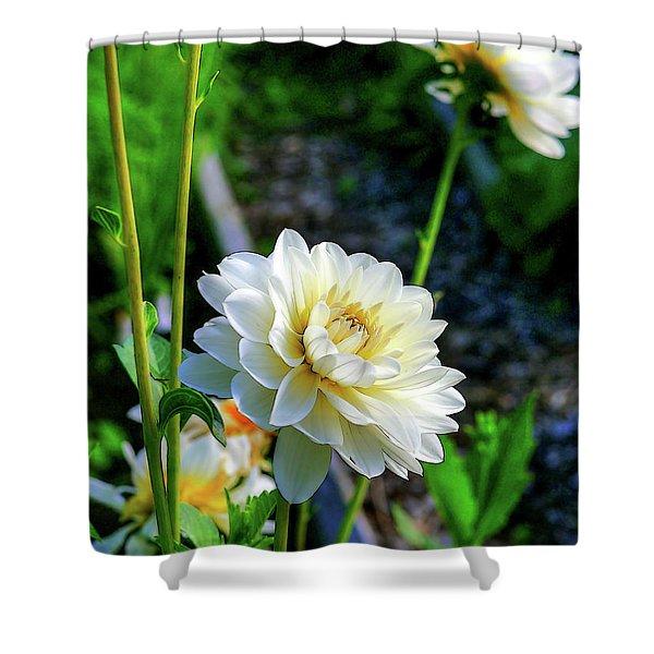Chrysanthemum In Bloom Shower Curtain