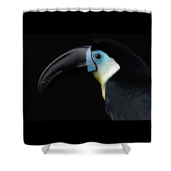 Close-up Channel-billed Toucan, Ramphastos Vitellinus, Isolated On Black Shower Curtain