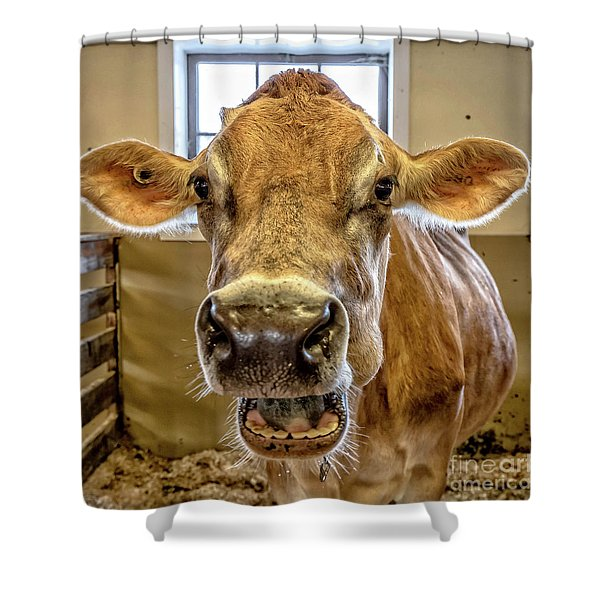 Close Up Of A Jersey Dairy Cow Shower Curtain