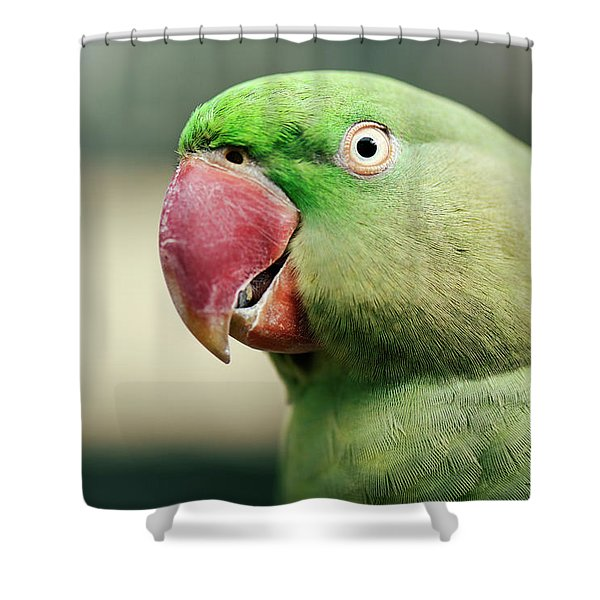 Close Up Of A King Parrot Shower Curtain