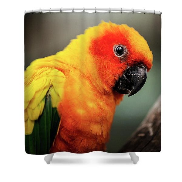 Close Up Of A Sun Conure Parrot. Shower Curtain