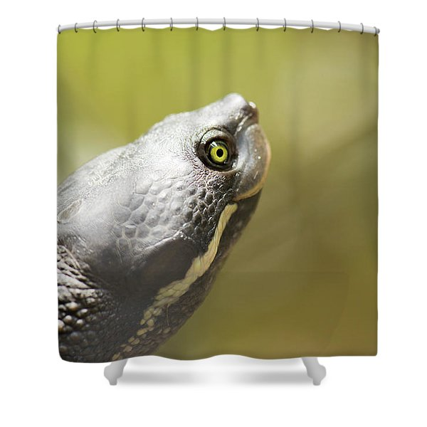 Close Up Of A Turtle. Shower Curtain