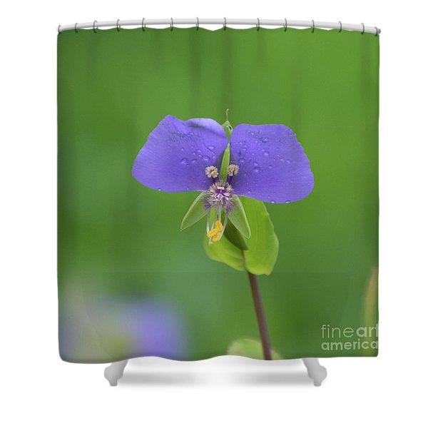 Close Up Of Purple False Dayflower Or Widows Tears Shower Curtain