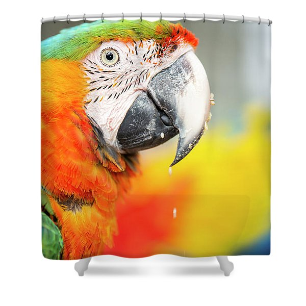 Close Up Of The Macaw Bird. Shower Curtain